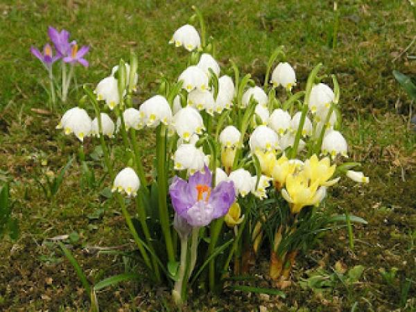 Пролетта на минифутбола
